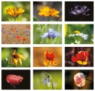 Postkarten-Set 12 Blütenmotive